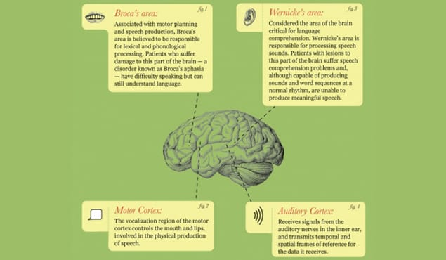 How the Brain Processes Language
